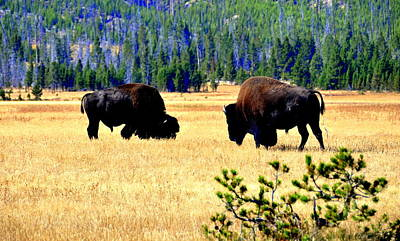 Yellowstonepark Poster by Aron Chervin