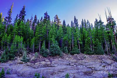 Yosemite Evening Pines Poster by Timothy Kleszczewski
