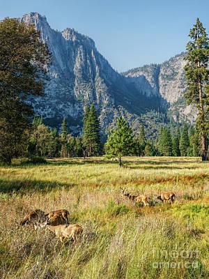 Yosemite Valley At Yosemite National Park Poster
