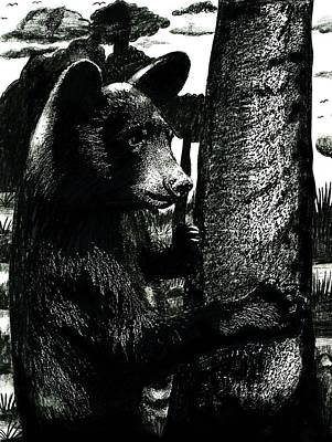 Young Black Bear In Tree  Poster
