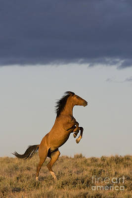 Young Mustang Poster