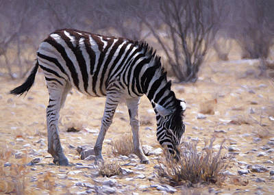 Poster featuring the digital art Young Plains Zebra by Ernie Echols