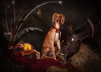Young Saluki Dog With A Horse Poster