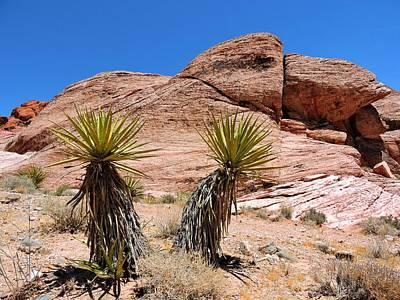 Yucca Plants Poster