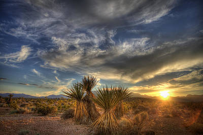 Yucca Sunset Poster