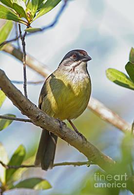 Zapata Sparrow Poster