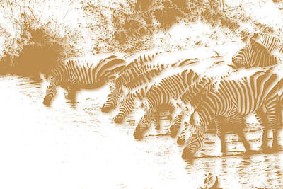 Zebra 6 Poster by Joe Hamilton