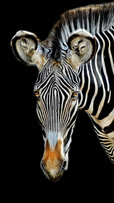 Zebra Poster by Dave Mills