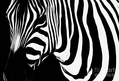 Zebra  Poster by Gull G