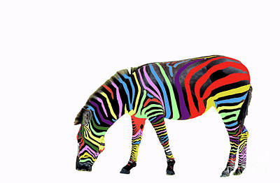 Zebra In My Dreams Poster by Bonnie Barry