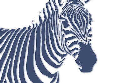 Zebra Poster by Joe Hamilton