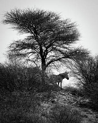 Poster featuring the photograph Zebra On A Hill  by Ernie Echols