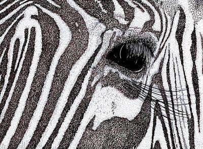 Zebra Portrait Poster by Karl Addison
