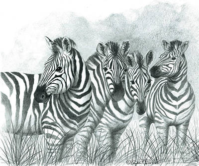 Poster featuring the drawing Zebra Quartet by Phyllis Howard