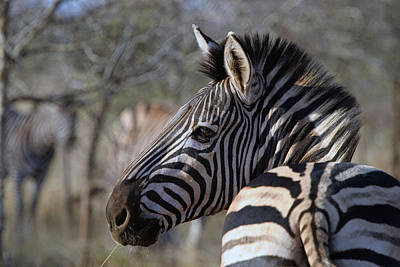 Poster featuring the photograph Zebra by Riana Van Staden