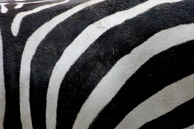 Zebra Wall Design 5 Poster by Heike Hultsch
