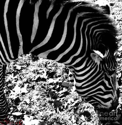 Zebra2 Poster
