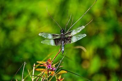 Zen Dragonfly 2 Poster