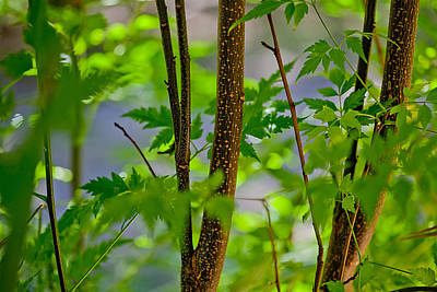 Zen Forest Poster by Az Jackson