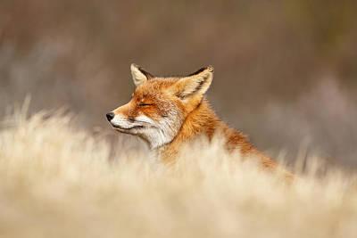 Zen Fox 4.0 Poster