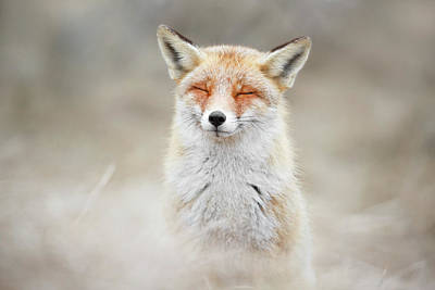 Zen Fox Series - What Does The Fox Think? Poster