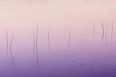 Zen Reeds  Poster by Thomas Schoeller