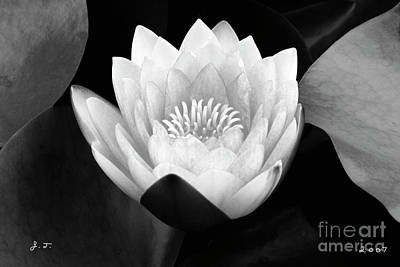 Waterlily Rising Poster