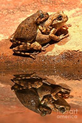 Zion Canyon Tree Frogs In Love Poster by Adam Jewell