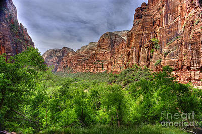 Zion View Of Valley With Trees Poster
