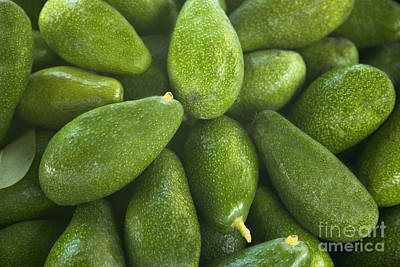 Zutano Avocados Poster by Inga Spence