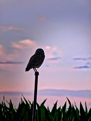 Burrowing Owl On A Stick Poster