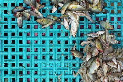 Fish At The Market Poster