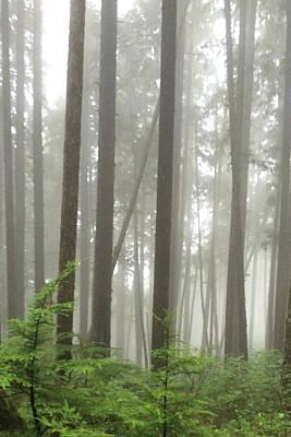 Poster featuring the photograph Foggy Forest by Karen Zuk Rosenblatt