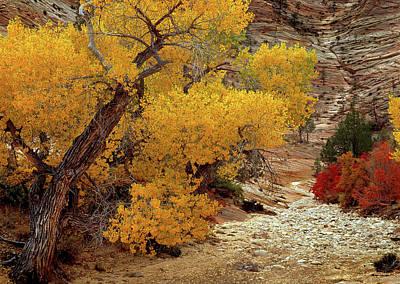 Zion National Park Autumn Poster