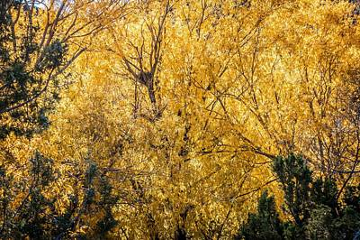 Poster featuring the photograph Autumnal Park. Autumn Trees And Leaves. Fall by Alex Grichenko