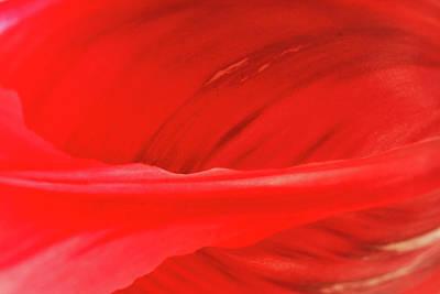 A Single Tulip Petal Poster