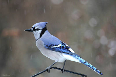 A Snowy Day With Blue Jay Poster