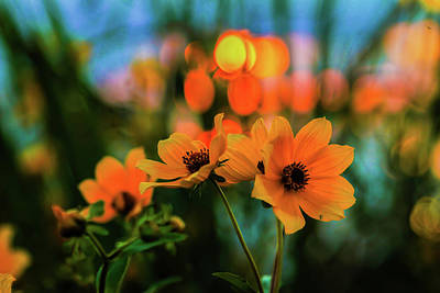 Sunflower Bokeh Sunset Poster