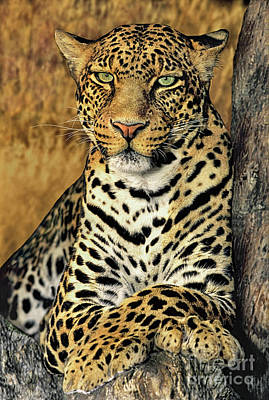 Poster featuring the photograph African Leopard Portrait Wildlife Rescue by Dave Welling