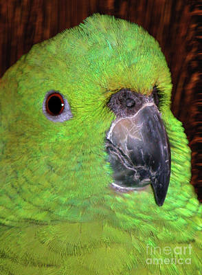 Poster featuring the photograph Amazon Parrot by Debbie Stahre
