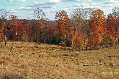 Poster featuring the photograph Animals Grazing On A Fall Day by Angela Murdock
