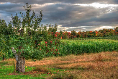 Poster featuring the photograph Apple Trees In Autumn - New Hampshire by Joann Vitali