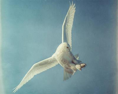 Arctic Angel Poster