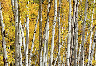 Poster featuring the photograph Aspen Autumn by Britt Runyon