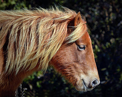 Poster featuring the photograph Assateague Pony Sarah's Sweet Tea Profile by Bill Swartwout Fine Art Photography