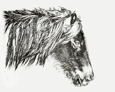 Poster featuring the photograph Assateague Pony Sarah's Sweet Tea Sketch by Bill Swartwout Fine Art Photography