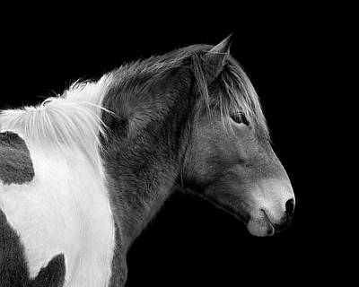 Poster featuring the photograph Assateague Pony Susi Sole Black And White Portrait by Bill Swartwout Fine Art Photography