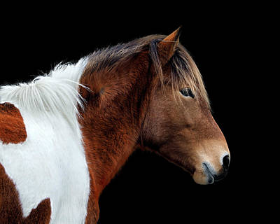 Poster featuring the photograph Assateague Pony Susi Sole Portrait On Black by Bill Swartwout Fine Art Photography