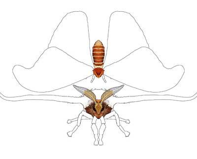 Atlas Moth1 Poster