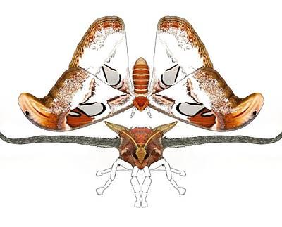 Atlas Moth2 Poster